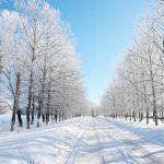 2月はやはり寒いですね!